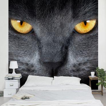 Fototapete Cats Gaze