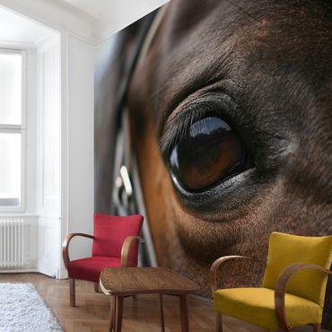 Fototapete Horse Eye