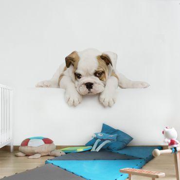 Fototapete Kleine Bulldogge