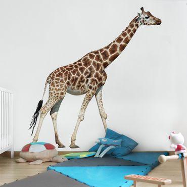 Fototapete Laufende Giraffe