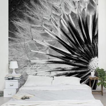 Fototapete Pusteblume Schwarz & Weiß