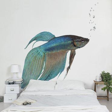 Fototapete Siamesischer Kampffisch II