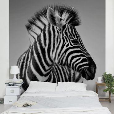 Fototapete Zebra Baby Portrait II