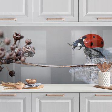 Küchenrückwand - Marienkäfer auf Hortensie