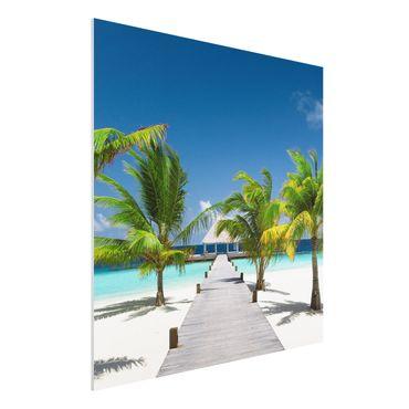 Forexbild - Catwalk To Paradise