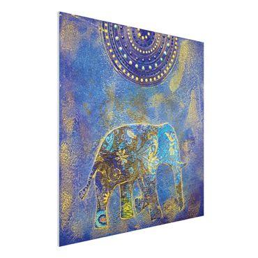 Forexbild - Elephant in Marrakech