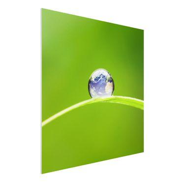 Forexbild - Grüne Hoffnung