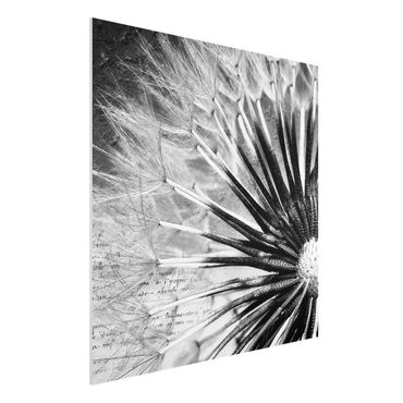 Forexbild - Pusteblume Schwarz & Weiß