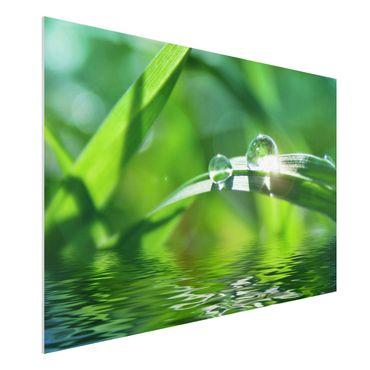 Forexbild - Green Ambiance II