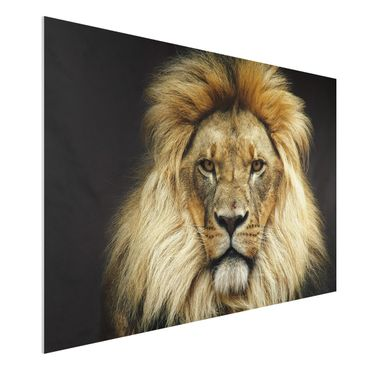 Forexbild - Wisdom of Lion