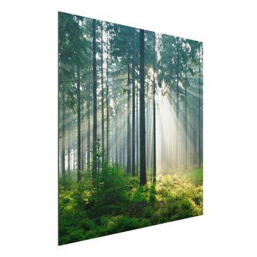 Alu-Dibond Bild - Enlightened Forest