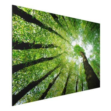 Alu-Dibond Bild - Bäume des Lebens