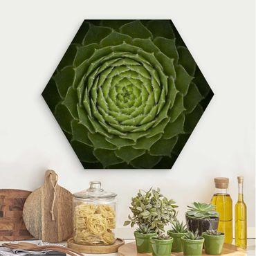 Hexagon Bild Holz - Mandala Sukkulente