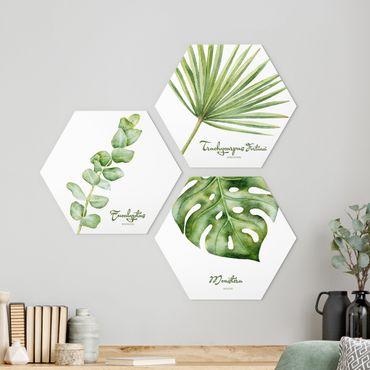 Hexagon Bild Alu-Dibond 3-teilig - Aquarell Botanik