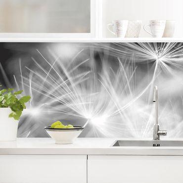 Küchenrückwand - Bewegte Pusteblumen Nahaufnahme auf schwarzem Hintergrund