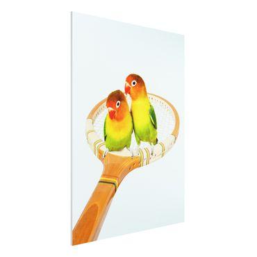 Forex Fine Art Print - Jonas Loose - Tennis mit Vögeln - Hochformat 4:3