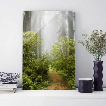 Glasbild - Nebliger Waldpfad - Hoch 2:3