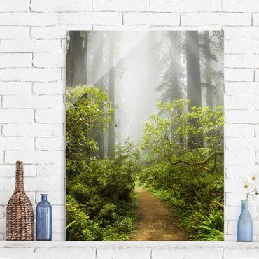 Glasbild - Nebliger Waldpfad - Hoch 3:4