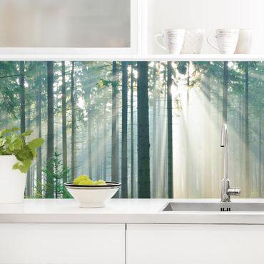 Küchenrückwand - Enlightened Forest