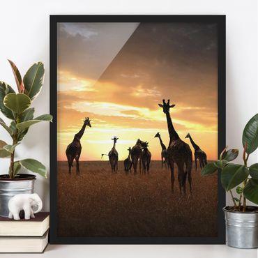 Bild mit Rahmen - Giraffen Familie - Hochformat 3:4