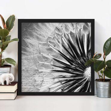 Bild mit Rahmen - Pusteblume Schwarz & Weiß - Quadrat 1:1