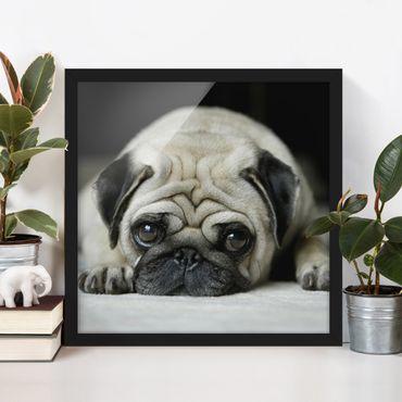 Bild mit Rahmen - Pug Loves You - Quadrat 1:1