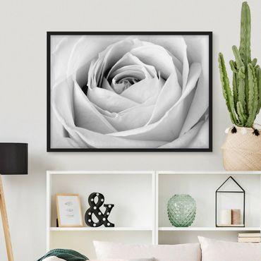 Bild mit Rahmen - Close Up Rose - Querformat 3:4