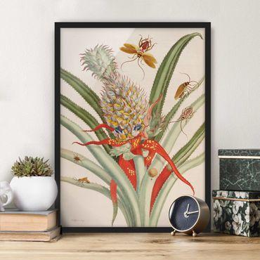 Bild mit Rahmen - Anna Maria Sibylla Merian - Ananas mit Insekten - Hochformat 4:3