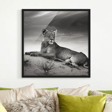 Bild mit Rahmen - Resting Lion - Quadrat 1:1