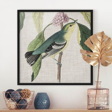 Bild mit Rahmen - Vogel auf Leinen Rosa I - Quadrat 1:1