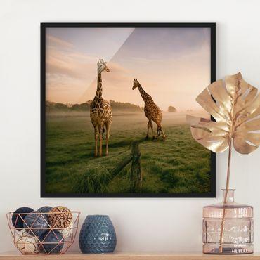 Bild mit Rahmen - Surreal Giraffes - Quadrat 1:1