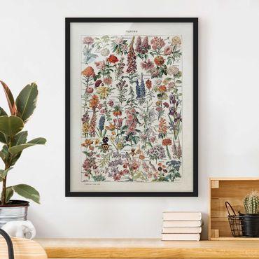 Bild mit Rahmen - Vintage Lehrtafel Blumen V - Hochformat 4:3