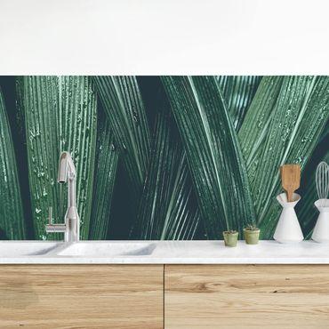 Küchenrückwand - Grüne Palmenblätter