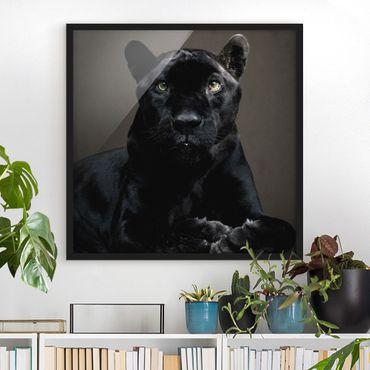 Bild mit Rahmen - Black Puma - Quadrat 1:1