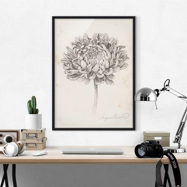 Bild mit Rahmen - Botanische Studie Chrysantheme II - Hochformat 4:3