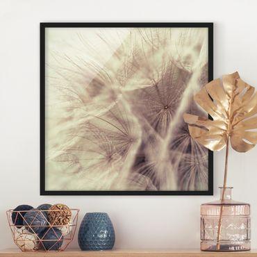 Bild mit Rahmen - Detailreiche Pusteblumen Makroaufnahme mit Vintage Blur Effekt - Quadrat 1:1