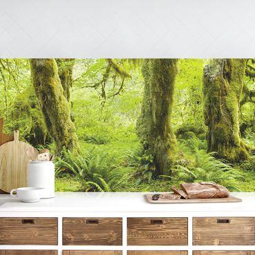 Küchenrückwand - Hall of Mosses Olympic National Park