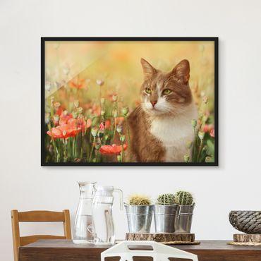 Bild mit Rahmen - Katze im Mohnfeld - Querformat 3:4