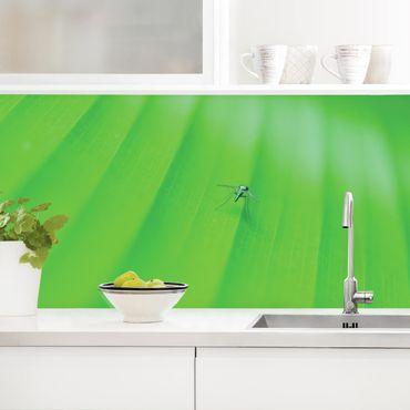 Küchenrückwand - Metal Mosquito