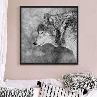 Bild mit Rahmen - Winter Wolf - Quadrat 1:1