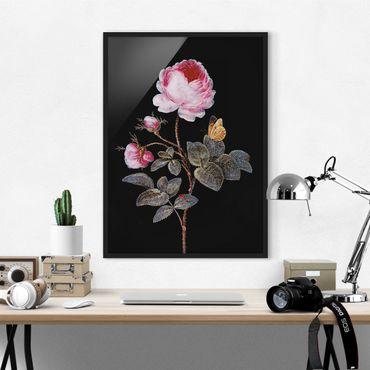 Bild mit Rahmen - Barbara Regina Dietzsch - Die hundertblättrige Rose - Hochformat 4:3
