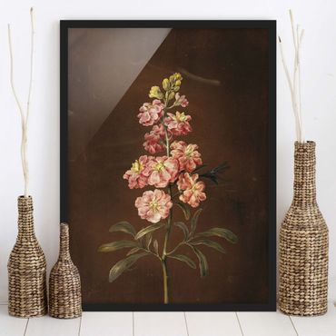 Bild mit Rahmen - Barbara Regina Dietzsch - Eine rosa Garten-Levkkoje - Hochformat 4:3