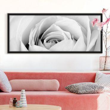 Bild mit Rahmen - Close Up Rose - Panorama Querformat