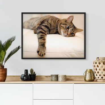 Bild mit Rahmen - Cat Chill Out - Querformat 3:4