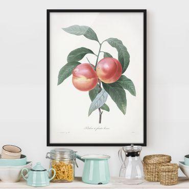 Bild mit Rahmen - Botanik Vintage Illustration Pfirsich - Hochformat 4:3