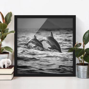 Bild mit Rahmen - Zwei springende Delfine - Quadrat 1:1