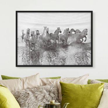 Bild mit Rahmen - Weiße Pferde im Meer - Querformat 3:4
