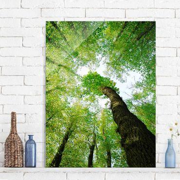 Glasbild - Bäume des Lebens - Hoch 3:4 - Waldbild Glas