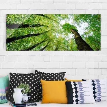Glasbild - Bäume des Lebens - Panorama Quer - Waldbild Glas