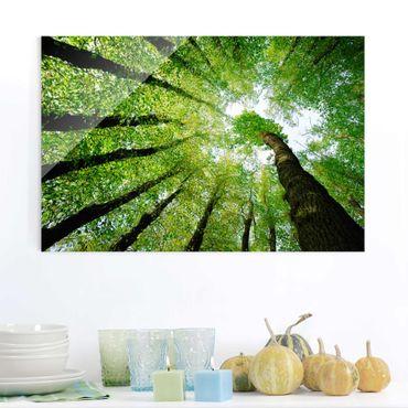 Glasbild - Bäume des Lebens - Quer 3:2 - Waldbild Glas